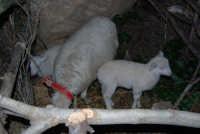 Presepe Vivente - 26 dicembre 2008  - Balata di baida (2435 clic)