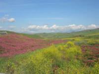 i colori della campagna siciliana a primavera - 25 aprile 2008   - Poggioreale (2831 clic)