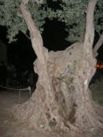 Il Presepe Vivente di Custonaci nella grotta preistorica di Scurati (grotta Mangiapane) (241) - 26 dicembre 2007   - Custonaci (1075 clic)