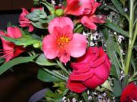 Rose e fiori (da Nicola per Lidia) - 4 febbraio 2006  - Alcamo (1368 clic)
