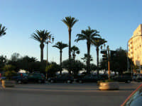 In visita nella città, in occasione della Trapani Louis Vuitton Acts 8 & 9 - Le palme di Piazza Vittorio Emanuele - 1 ottobre 2005   - Trapani (1537 clic)