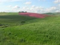 i colori della campagna siciliana a primavera - 25 aprile 2008   - Poggioreale (2452 clic)