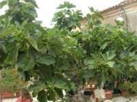 ficara all'interno del Baglio Isonzo - 8 giugno 2008  - Scopello (1268 clic)
