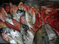 pranzo al Ristorante del Golfo (da Liborio - specialità pesce) - via Segesta, 153 -: pesci in esposizione - 7 maggio 2006  - Castellammare del golfo (3141 clic)