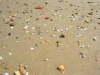 sul bagnasciuga - 4 settembre 2007  - Alcamo marina (1545 clic)