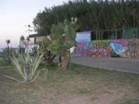 aiuola sullo spiazzale antistante alla spiaggia - 1 ottobre 2007  - Cinisi (1921 clic)