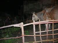 Presepe Vivente - 26 dicembre 2005  - Calatafimi segesta (1270 clic)
