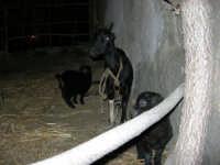 Presepe Vivente - 26 dicembre 2005  - Calatafimi segesta (1998 clic)