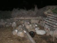 Il Presepe Vivente di Custonaci nella grotta preistorica di Scurati (grotta Mangiapane) (110) - 26 dicembre 2007   - Custonaci (916 clic)