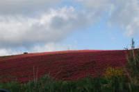 i colori della campagna siciliana a primavera - 25 aprile 2008   - Camporeale (2329 clic)