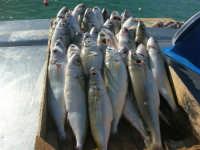 vopi al porto - 13 marzo 2009  - Castellammare del golfo (4862 clic)