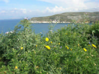Golfo di Castellammare - la costa tra Guidaloca e Castellammare del Golfo - 5 aprile 2009   - Castellammare del golfo (850 clic)