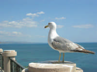 il gabbiano ed il mare - 25 aprile 2008   - Sciacca (1736 clic)