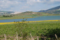 Lago Arancio - 25 aprile 2008   - Sambuca di sicilia (1414 clic)