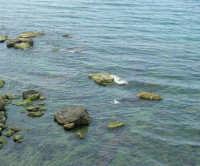 cala Petrolo: volo di un gabbiano sugli scogli - 7 maggio 2006  - Castellammare del golfo (1168 clic)