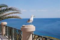 il gabbiano ed il mare - 25 aprile 2008   - Sciacca (1292 clic)