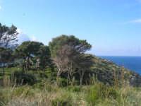 Golfo di Castellammare - la costa tra Guidaloca e Castellammare del Golfo - 5 aprile 2009   - Castellammare del golfo (922 clic)