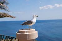 il gabbiano ed il mare - 25 aprile 2008   - Sciacca (1260 clic)