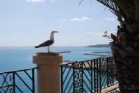 il gabbiano sul belvedere, con vista sul porto - 25 aprile 2008   - Sciacca (1279 clic)