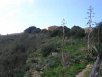 area archeologica: il tempio seminascosto dalla vegetazione - 18 gennaio 2009  - Segesta (4534 clic)
