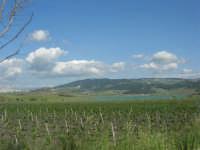 Lago Arancio - 25 aprile 2008   - Sambuca di sicilia (1116 clic)