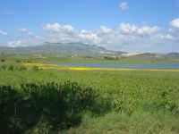 Lago Arancio - 25 aprile 2008   - Sambuca di sicilia (1273 clic)