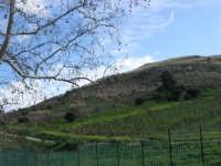 panorama - 18 gennaio 2009  - Segesta (2645 clic)