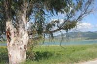Lago Arancio - 25 aprile 2008   - Sambuca di sicilia (1159 clic)
