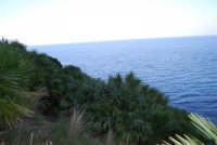 il verde della vegetazione e l'azzurro del mare - 24 febbraio 2008  - Riserva dello zingaro (692 clic)