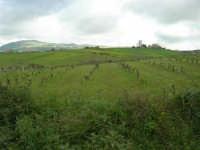 paesaggio agreste - 5 aprile 2009   - Buseto palizzolo (1913 clic)