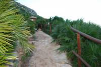 sentiero tra le palme nane - 24 febbraio 2008  - Riserva dello zingaro (854 clic)
