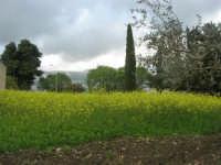paesaggio agreste - 5 aprile 2009   - Buseto palizzolo (2272 clic)
