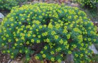 flora - 24 febbraio 2008  - Riserva dello zingaro (1156 clic)