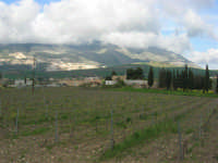 paesaggio agreste - 5 aprile 2009   - Buseto palizzolo (1866 clic)