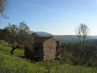 rudere di un casolare ai bordi del Bosco di Scorace - 21 febbraio 2009   - Buseto palizzolo (2024 clic)