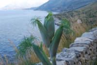 flora e panorama del Golfo di Castellammare - 24 febbraio 2008  - Riserva dello zingaro (708 clic)