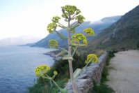 flora e panorama del Golfo di Castellammare - 24 febbraio 2008  - Riserva dello zingaro (730 clic)