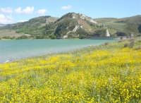 Lago Arancio - 25 aprile 2008   - Sambuca di sicilia (1401 clic)