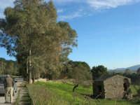rudere di un casolare ai bordi del Bosco di Scorace - 21 febbraio 2009   - Buseto palizzolo (1951 clic)