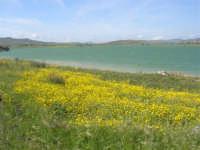 Lago Arancio - 25 aprile 2008   - Sambuca di sicilia (1614 clic)