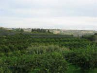 aranceto - 9 novembre 2008  - Ribera (1802 clic)