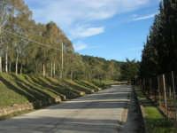 Bosco di Scorace - 21 febbraio 2009   - Buseto palizzolo (2547 clic)