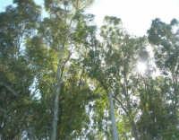 il sole tra gli alberi sulla riva del Lago Arancio - 25 aprile 2008   - Sambuca di sicilia (1576 clic)