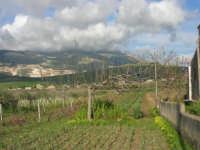 paesaggio agreste - 5 aprile 2009   - Buseto palizzolo (1678 clic)