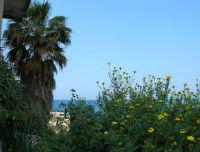 palma, margherite ed uno scorcio di mare - 7 maggio 2006  - Castellammare del golfo (953 clic)