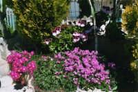 aiuola fiorita - maggio 2006  - Alcamo (1351 clic)