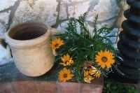 vaso con margheritone - maggio 2006  - Alcamo (1153 clic)