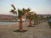 palme sul lungomare - 12 ottobre 2008  - Cornino (1334 clic)