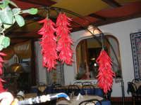 Cous Cous Fest 2007 - peperoncino esposto all'interno di un ristorante - 28 settembre 2007   - San vito lo capo (1017 clic)