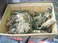 ostriche in esposizione dinanzi al Ristorante La Cambusa - 3 dicembre 2006  - Castellammare del golfo (2337 clic)